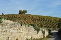 Sentier viticoles - Millery - 7,7 km