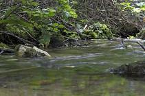 Randonn�e sur le chemin du Val Jaouen, Triqueville 27500