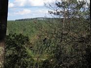 Randonnée Forêt