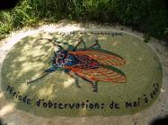 Sentier botanique Génicourt sur Meuse