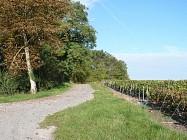 Entre vignoble, vergers et patrimoine à Sézanne