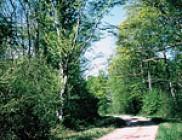 Circuit des forêts et champs