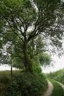 L'arbre à mouches