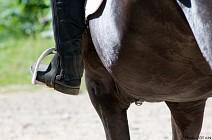 Itin�raires �questres L'Ain � cheval