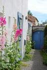 Roses trémières - Ile de Noirmoutier