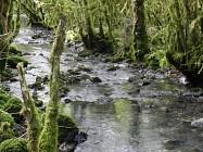 Balade Le ruisseau de Noire Fontaine