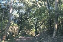 L'Arboretum - Olonne sur Mer