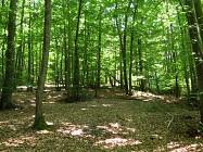 Circuit de randonnée : La Madone et Le Bois des Roches