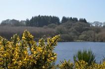 L'étang du Rocleu