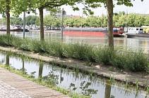 Les boucles de la Moselle de Nancy à Messein
