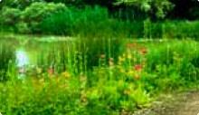 Fleurs et jardins. (Les villages fleuris de Lorraine)