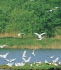 Site ornithologique des cinq tailles