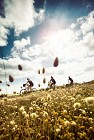 Boucle n°10 - COEX - agréée Accueil Vélo