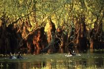 La Forêt du Petit-Orient