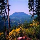 Trail du Wurzel | Le 20 mai 2012 à Villé