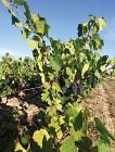 Sentier des Vignes à Saint Philbert de Bouaine