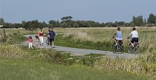 Sentier du grand marais - Soullans