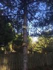 Sentier 1, 2, 3 Allons dans les bois - Pédestre