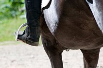 Itinéraires équestres L'Ain à cheval