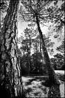 Promenade ombragée en forêt - sentier du bout des cabanes